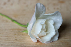 White rose with drops on wood for love, remembrance. White rose with drops on wooden background.  Could be used for love, remembrance, peace Royalty Free Stock Image