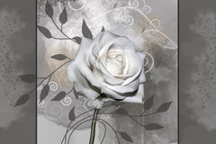 White rose flower. Grunge old paper background with gentle white rose flower Stock Photography