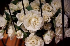 White rose is the flower that I am very edge. royalty free stock photos