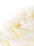 White Rose Flower Petals Royalty Free Stock Photo