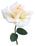 White rose flower. Royalty Free Stock Photo