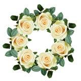 White rose flowers Stock Photos