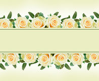White rose flowers borders Stock Images