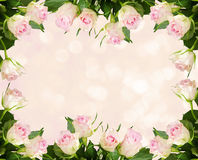 White rose flowers frame and bokeh. Beautiful white rose flowers frame on bokeh background Royalty Free Stock Images