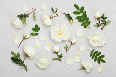 White rose flowers and green leaves on light gray background from above, beautiful floral pattern, vintage color, flat lay Stock Images