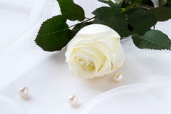 White rose in a gift. Delicate white rose in a gift on a transparent fabric with pearls royalty free stock images