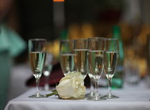 White Rose and glasses of wine Royalty Free Stock Photo