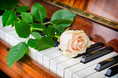 White rose on grand piano Royalty Free Stock Photography