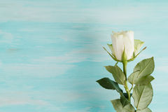 White rose with green leaves over wooden background Stock Image