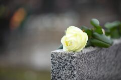White rose on grey granite tombstone, space for text. Funeral ceremony