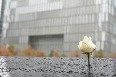 White Rose at Ground Zero. A white Rose marks the Birthday of one of the victims of the 9/11 attacks stock photography