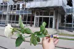 White rose in hand and building which has destroyed war in Donet Stock Photography