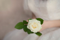White rose in the hands of the bride. Beautiful, delicate white rose in the hands of the bride Stock Photos