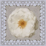 White rose on the linen cloth with Crochet frame. Handmade Collage background for Valentine day. White rose on the linen cloth with Crochet frame. Handmade Stock Photography