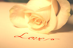 White rose and Love. A beautiful white rose with the word Love in red calligraphy Royalty Free Stock Photo