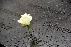White rose memorial at 911 World Trade Center former site. This is a white rose memorial at 911 World Trade Center former site on a rainy day. White rose is the Stock Photos