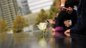A white rose memorial at 911 world trade center former site royalty free stock photos