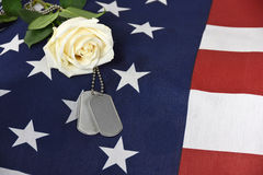 White rose with military dog tags Royalty Free Stock Photo