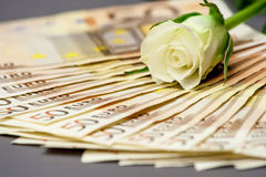 White rose and money Royalty Free Stock Photography