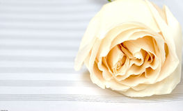 White rose on a music book Royalty Free Stock Images