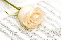 White rose on the musical notes. Page Stock Images