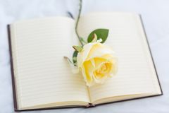 White Rose on open blank Notebook. stock photo