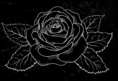White rose outline with gray spots on a black back Stock Photo