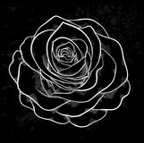 White rose outline with gray spots on a black background. Stock Images