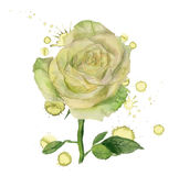White rose with paint blots Stock Photo