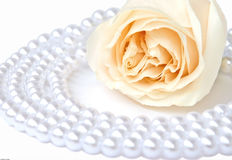 White rose and pearl necklace. For the bride Royalty Free Stock Photos