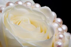 White rose with pearls. Extreme close up of white rose with pearls on the black background. Isolated Stock Photo