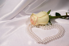 White rose and pearls. On white background Stock Image