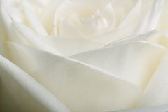 White rose petals Stock Photography