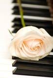 White rose on piano keys. Romantic concept - white rose on piano keys stock image
