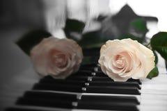 White rose on piano keys. Close up Royalty Free Stock Image