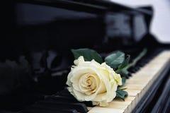 White rose on piano keys,. Closeup Royalty Free Stock Photos