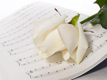 White Rose on a Piece of MUsic Royalty Free Stock Photos