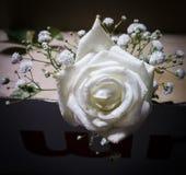 White Rose. Portrait of single white rose Stock Photography