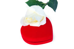 White rose and red box in a heart shape Royalty Free Stock Image
