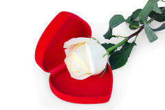 White rose in the red box in a heart shape Stock Images
