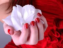 White rose in hand with red nail. White rose with red nail in hand of young girl Royalty Free Stock Photography