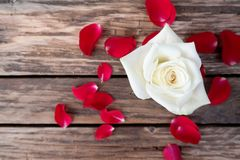 Valentines day, white rose and red petals on old wooden table. Creative love concept with text space Royalty Free Stock Photos