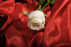 White rose on a red satin Stock Photo