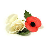 White Rose And Remembrance Poppy Royalty Free Stock Photography