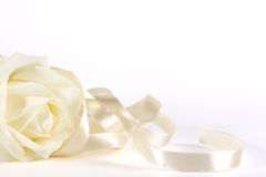 White rose and ribbon Royalty Free Stock Photography