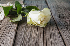 White rose on rustic table stock image