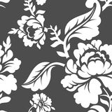 White Rose seamless pattern. Retro floral texture. Vintage Flora Royalty Free Stock Photography