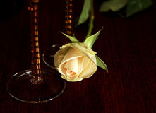 White rose on table Royalty Free Stock Image