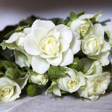 White rose at table Royalty Free Stock Photography
