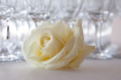 White rose on the table, in the background glasses of champagne, wedding event, close-up stock photography